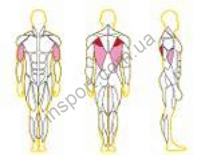 X 102 Блок для мышц спины (нижняя тяга) 100 кг