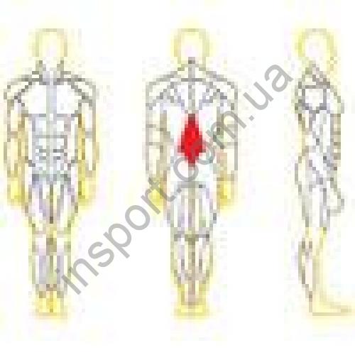 N105 Разгибатель спины