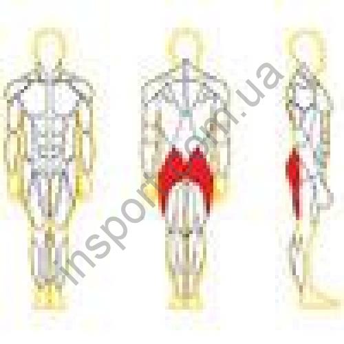 N116 Тренажер для ягодичных мышц бедра (радиальный